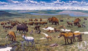 Pleistocene-park-jurassic-park-of-today